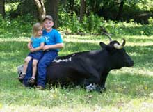 Youngsters sitting on a gentle cow.